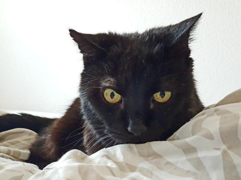 Schwarze Katze im Kameratest des Galaxy S9+