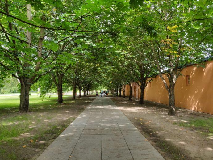 Allee von Bäumen