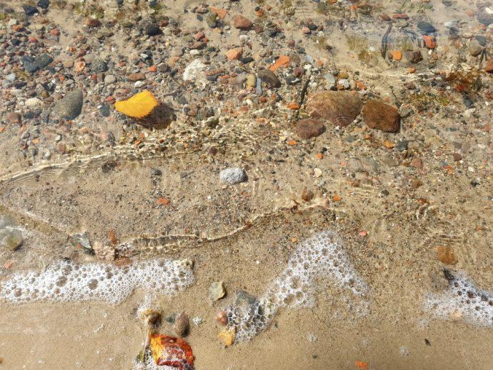 Galaxy Note 9 Foto von Wasser