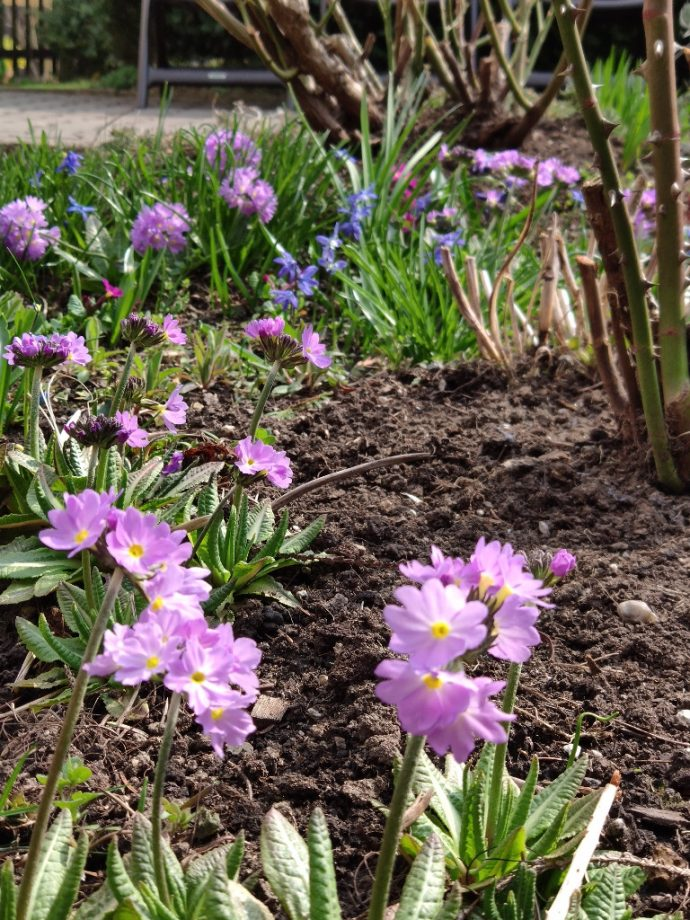 Frühlingserwachen im Bild eingefangen